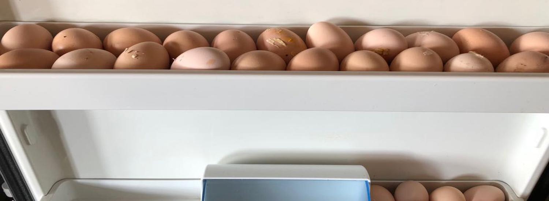 verse eigen eieren Overhorn Weesp